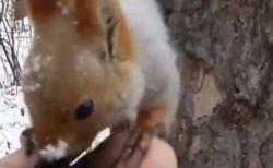 【冬】手のひらに乗せて差し出した餌を食べにくるリスや小鳥・・・めちゃ可愛い!