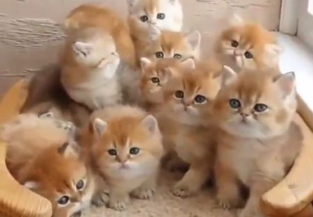 【ねこ密】密集する子猫が可愛いすぎると話題