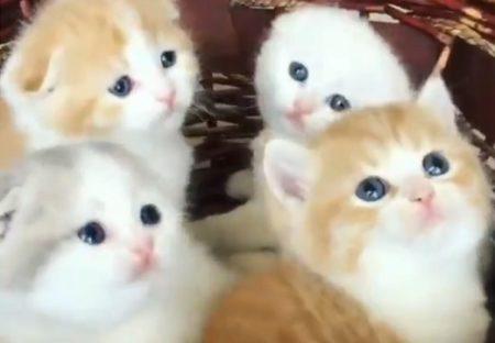 【動画】何かを夢中で目で追う4匹の子猫。つぶらな目が最高にキュート