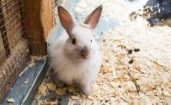 【動画】立ち上がってキスするウサギが話題「うさぎってこんな愛情表現するんだ!」