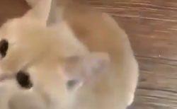 可愛すぎる猫ちゃん。これは抱っこせざるを得ない!