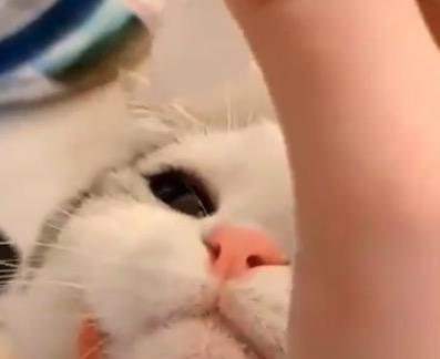 目薬を我慢できちゃう猫ちゃん。偉すぎる!