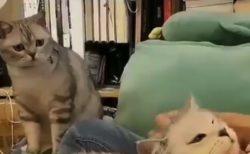 ヤキモチを焼く猫ちゃん。そんな顔しないで・・・
