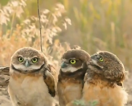 小道具で兄弟を驚かせる「フクロウ」の赤ちゃんが最高!