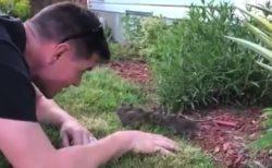 好奇心旺盛な野生の「赤ちゃんウサギ」が可愛すぎる!