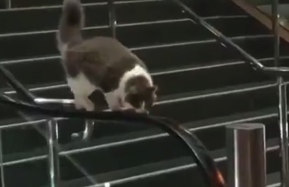 【猫】エスカレーターの手すりで「キャットウォーク」の練習!