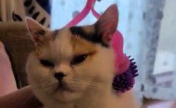 小顔ローラーでマッサージ。気持ち良さそうな猫ちゃん!