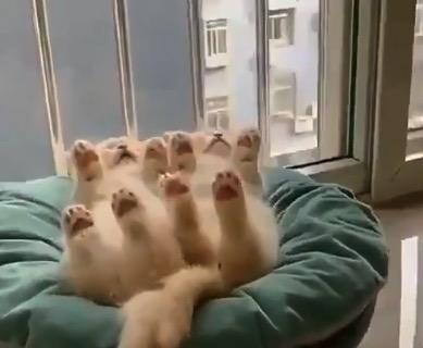 【シンクロ】クッションの上。同じ体勢で仲良く眠る子猫ちゃんたち!