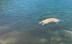 【すごい】シンクロさながらに潜っていく犬!ものすごい笑顔で楽しそう!