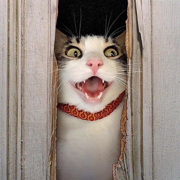 あの名作「シャイニング」を猫がやってみた(画像あり)