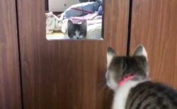 【いたっ!】鏡へ思い切りジャンプしちゃった猫が話題「申しわけないけど爆笑」