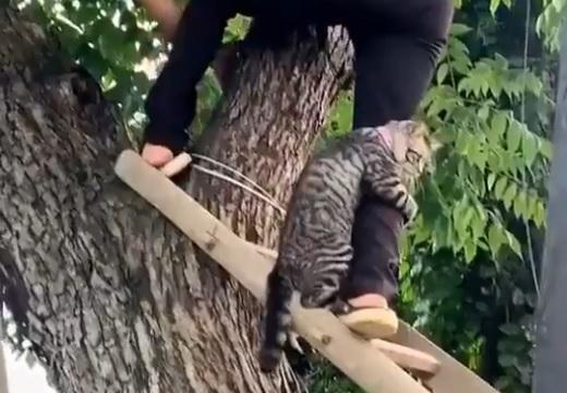 【コワイヨォ~】木から降りられなくなった猫、救助される様子が可愛いすぎる「こわいよ~って言ってるw」