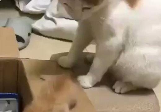 【爆笑】母猫、もじもじしてる子猫に・・の動画が話題「さすがライオンの仲間!」