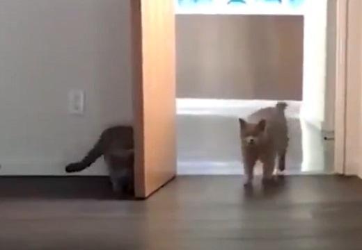 【動画】隠れて驚かす猫と思い切りびっくりする猫が話題「めっちゃ仲良しw」