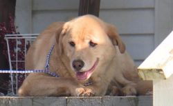 【帰巣本能】行方不明になった犬、90キロ以上離れた転居前の家で発見される
