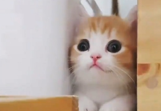 【天使】ちょこちょこっと動くだけで最高レベルに可愛い子猫が話題