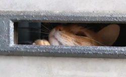 【激かわ】留守番してる猫たちの様子を郵便受けから覗いてみると・・・