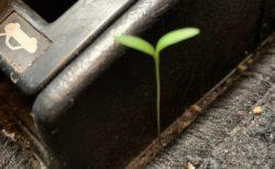 【w】「久しぶりにクルマ乗ったら・・」車内で成長する草やキノコが発見され話題に
