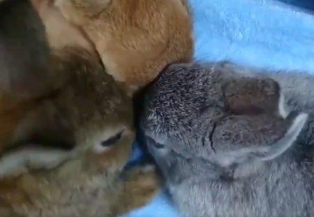 【?!】3羽のうさぎがぴとっとなる動画。なんつー可愛さ!