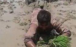 【動画w】インドの斬新な田植え風景が話題に(・∀・)