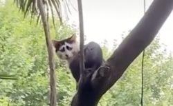【笑】独特の模様の猫さん、なんともいえない表情に見えてしまう