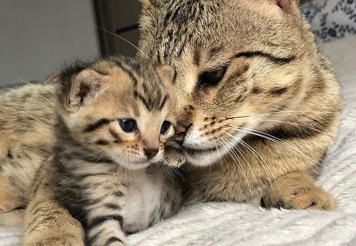 【尊い】子猫と美人ママ、3枚の写真が話題「愛があふれてる」