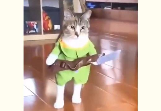 【動画】狩人の格好でさっそうと登場する猫が話題「学芸会みたいw」