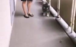 セミファイナルのトラウマがある犬、行く先にセミを発見。びびる様子に共感者多数w