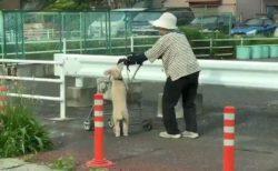 【犬】歩調を合わせ、周りとおばあちゃんの顔を確認しながらいっしょにカートを押す犬が話題