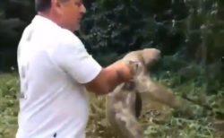 【感動】おじさんに助けてもらったナマケモノ 「バイバイ!」って言われた時の行動が素敵