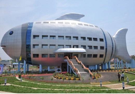 【さかな】インドの水産庁、すごく可愛い(・∀・)