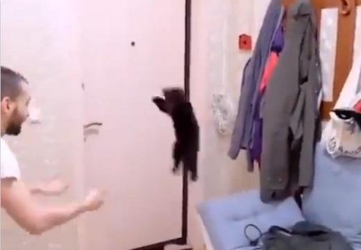 【信頼関係】ジャーンプ!キャッチ!を延々と繰り返す黒ちゃんが超かわいい