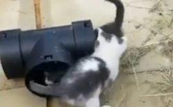 【無限ループ】2匹の子猫がぐるぐる周っている動画、可愛いすぎて笑えるw