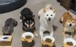 【忠義感w】犬といっしょに育った猫の動画が話題「犬と思ってる!」