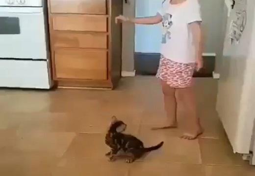 【w】女児の側転を見た子猫、可愛いすぎる反応が話題