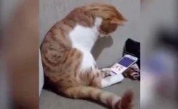【泣いた】亡くなった飼い主の動画を見る猫の様子。切ない・・