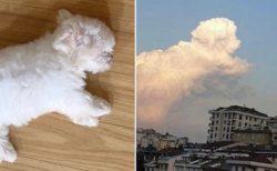 【!】子犬と雲、そっくりの形が話題に