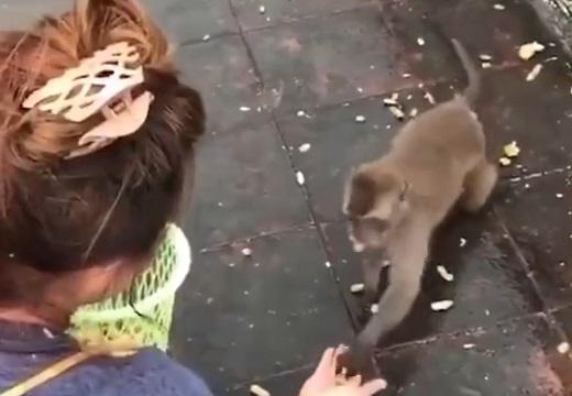 【w】美女におやつもらった猿くん。去りぎわ豪快にずっこけてしまう!