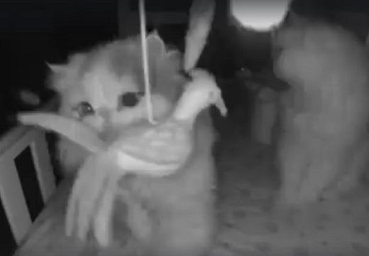 【動画】赤ちゃんが留守のベビーベッド、夜中に夢中で遊ぶ猫達が撮影される(・∀・)