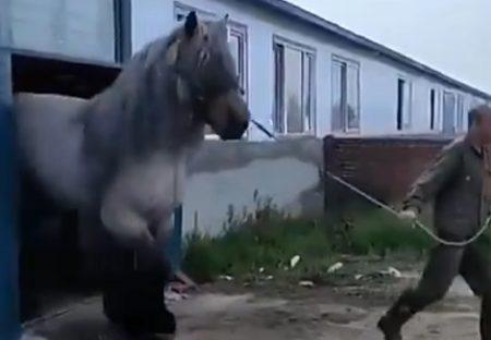 【?!】ものすごく巨大な馬にネット騒然「ラオウの馬だ」「黒王号」