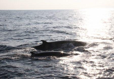 【音声】クジラの親子が会話が話題「神秘的‥」「癒される」