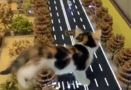 【w】小さい街をうろうろする猫が話題「何回も見てる♪」