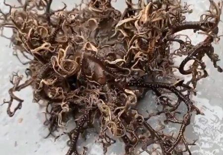 海で釣れたヤバすぎる深海生物にネット騒然!→第一人者、東大の先生が解説に登場