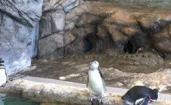 【爆笑w】水に浸からず仁王立ちしているペンギン!よく見ると頭上に扇風機がw