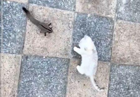 【猫とモモンガ】「一発触発か!」と思ったらぜんぜん違った2匹がカワイイ
