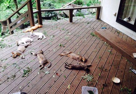【?!】ぱっと見ぎょっとする猫達の昼寝画像が話題にw