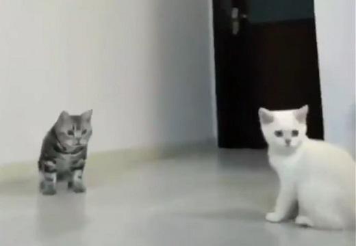【w】ボールをキャッチする猫のジャンプと、あわあわしてる猫。どっちも可愛い