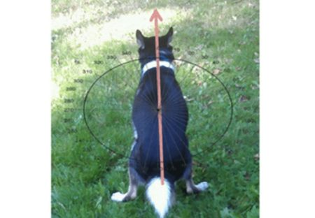 【地球の磁場に】犬が排泄するまえぐるぐる回る理由。長年の研究で解明される!