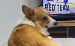【w】ゲームする飼い主をジト目で見つめるわんちゃん。電源オフを察した瞬間‥