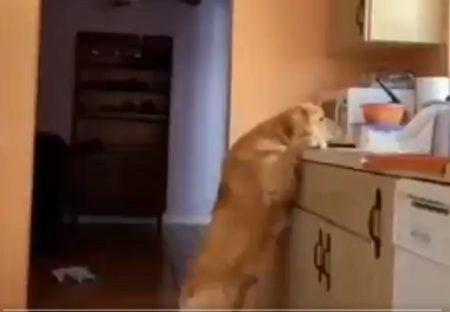 【犬】美味しそうな物に手を伸ばし‥ゲットした時の表情と、声をかけられた時の表情w